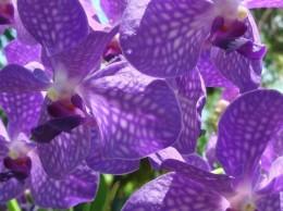 come-fotografare-le-orchidee_NCG4