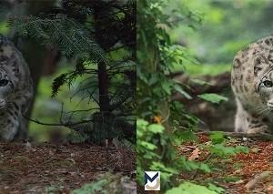 Dittico Prima e Dopo da uno scatto di ©Claudia Rocchini